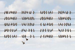 birds sitting on telephone lines